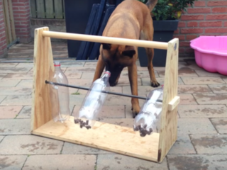 This DIY dog toy will keep your pet busy