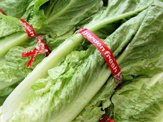 FL reports illnesses linked to romaine lettuce