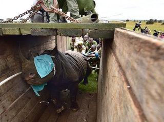 8 endangered black rhinos die after relocation